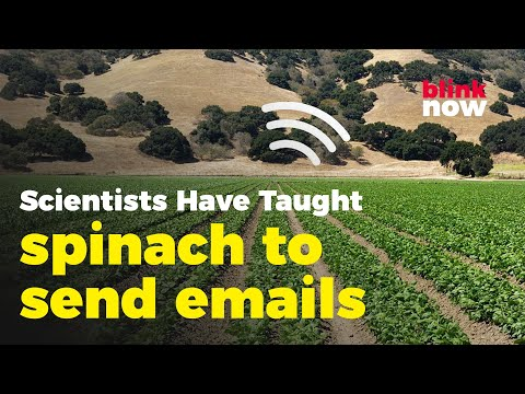 Scientists-Have-Taught-Spinach-Plant-To-Send-Emails-Blink-Now