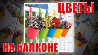 видео Украшаем балкон цветами