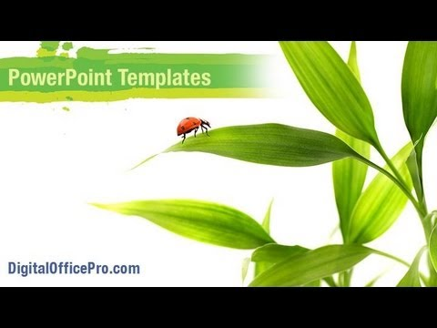 Ladybird on Leaves PowerPoint Template Backgrounds ...