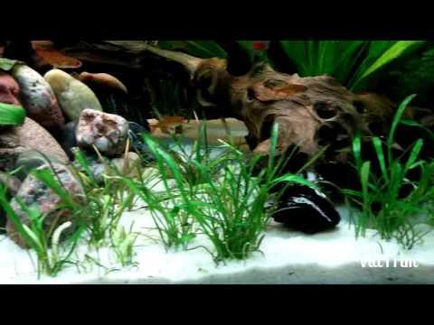 amazonas aquarium video von youtube. Black Bedroom Furniture Sets. Home Design Ideas