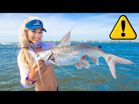 Giant VENOMOUS Saltwater Catfish Catch Clean COOK! Gafftopsail Catfish Taste Test!