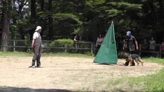 2011/08/07 富士スバル・ドギーパークにて、望月ドックスクール主催、警察...