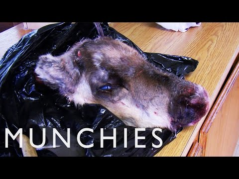 Cooking with Polar Bear Meat & Caribou Head