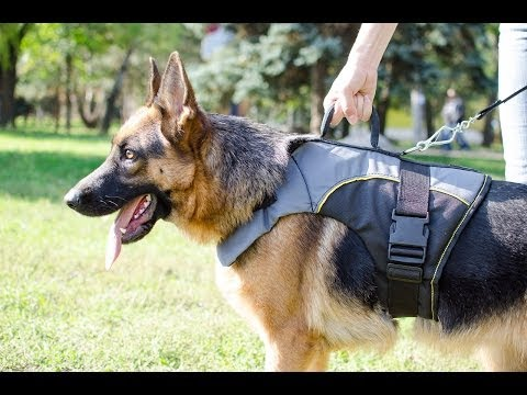 Nylon Dog Vest - Tutorial On How To Measure Your Dog