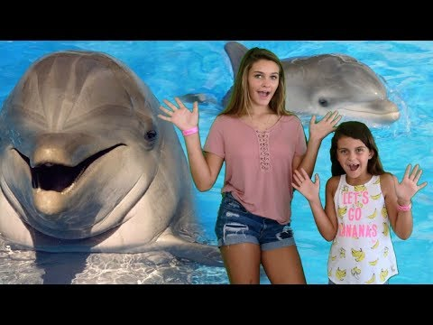 AWESOME DOLPHIN ADVENTURES!  NO THUMBS CHALLENGE!