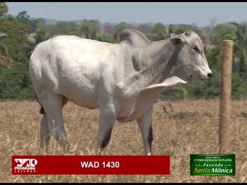 LOTE 38 - WAD 1430