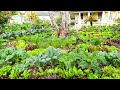 NOW is The Time to Grow a Victory Garden  Soil Block Update W/ Jim Kovaleski