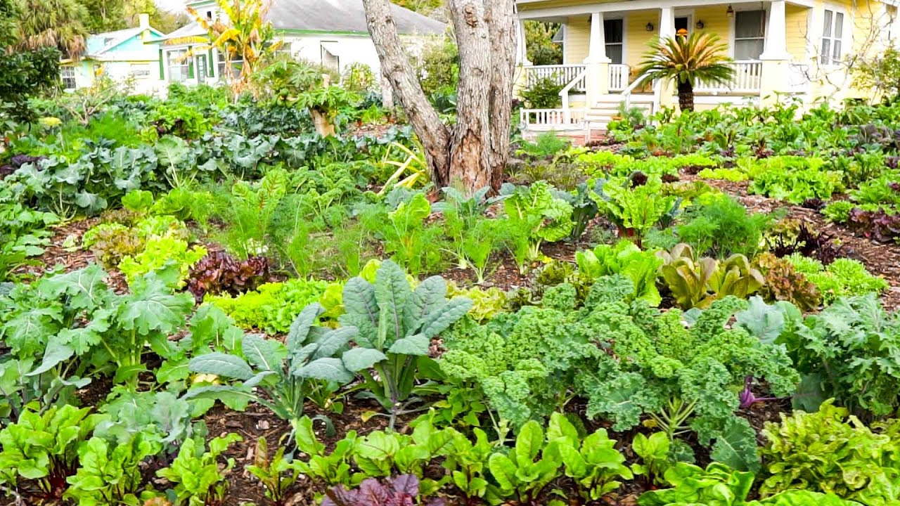 Now Is The Time To Grow A Victory Garden Soil Block Update W Jim