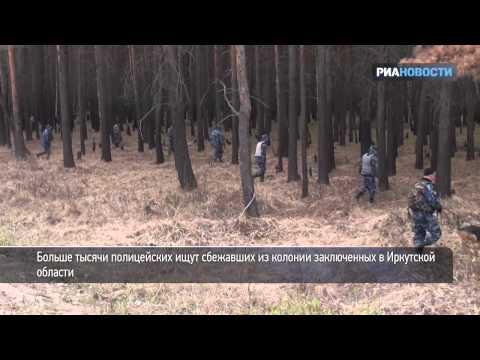 Полицейские прочесывают лес в поисках сбежавших заключенных