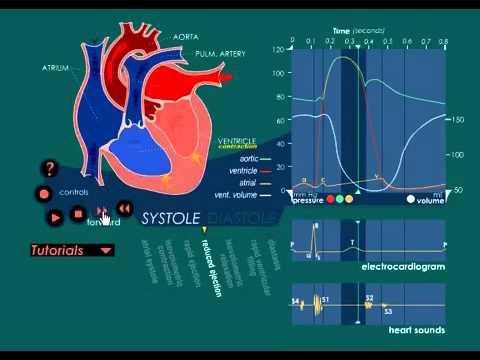 Ciclo Cardiaco Universidad de Utah - YouTube