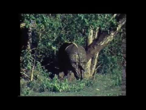 Velika čuda svijeta - Čuda prirode from YouTube · Duration:  1 hour 9 minutes 13 seconds