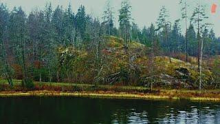 Такого мы не ожидали ЩУКИ ГНУТ СПИННИНГИ Попали на ЖОР Рыбалка на лесном озере