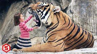Download lagu Bukan Kucing Atau Anjing, 10 Bocah ini Malah Pelihara Hewan Paling Buas di dunia..Ga ada takutnya!