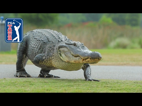 Highlights | Round 1 | Zurich Classic of New Orleans from YouTube · Duration:  2 minutes 10 seconds