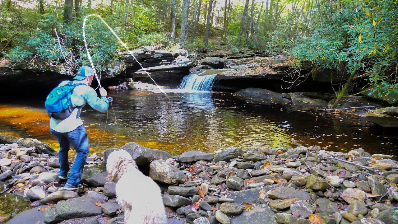 Creek Fishing for Beautiful Trout!! (Fall Trout Fishing)