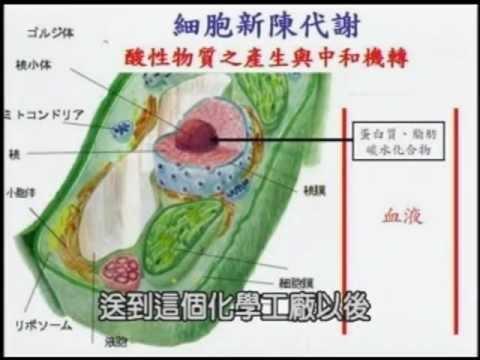 王辉明医师讲 - 改变饮食预防癌症 (全集)