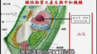 Repeat youtube video 王辉明医师讲 - 改变饮食预防癌症 (全集)