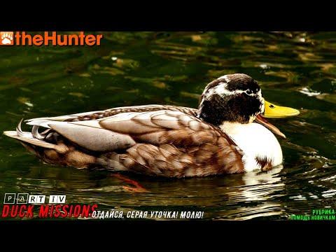 ♢ TheHunter Classic ➫ Рубрика: Помощь новичкам ➫ DUCK MISSIONS 🅿🅰🆁🆃VI ➫ Отдайся Gadwall ♢
