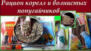 Особенности рациона (питания) корелл и волнистых попугайчиков