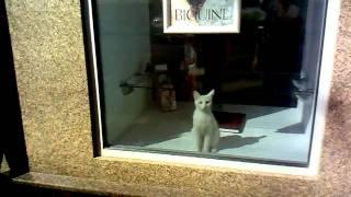 кот в витрине магазина