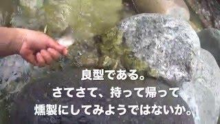岩魚を燻製の為に捕獲する回