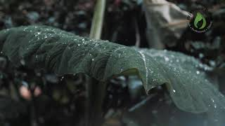 RELAX to RAIN splashing to the ground.  Yoga, Meditate or Sleep.  Sounds of NATURE.  Get to SLEEP.
