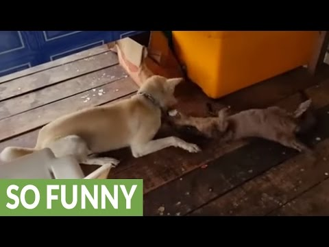 Dog befriends wild otter, must-see playtime ensues