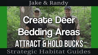How To Create Deer Bedding Areas On Your Property