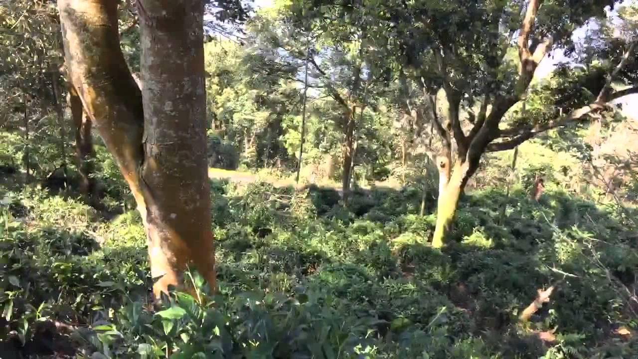 發現山茶發現美好 六龜新發原生山茶 - YouTube