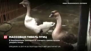 إعدام جماعي للطيور في حديقة حيوانات فورونيج
