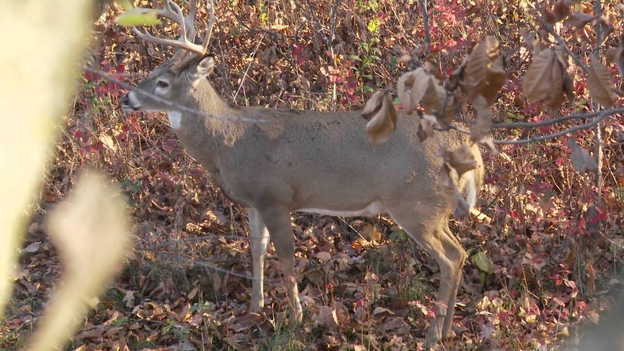 Deer Hunting The Rut In Missouri Youtube