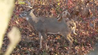 Deer Hunting the Rut in Missouri