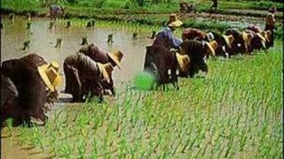 Rice & Thai Culture
