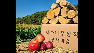 사과나무장작만 유일하게취급 하는곳경북 안동시 예천군 봉…