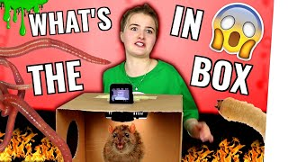 What's in the Box Challenge 2