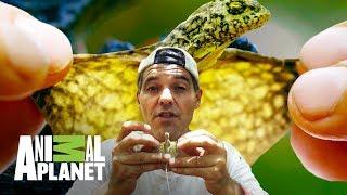 Aventuras con Wild Frank: Los dragones de Frank   Animal Planet