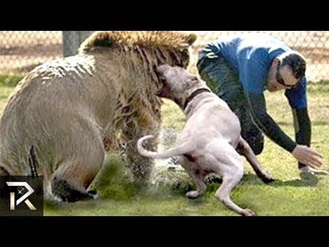 10 Dogs That Protect People From BEASTS