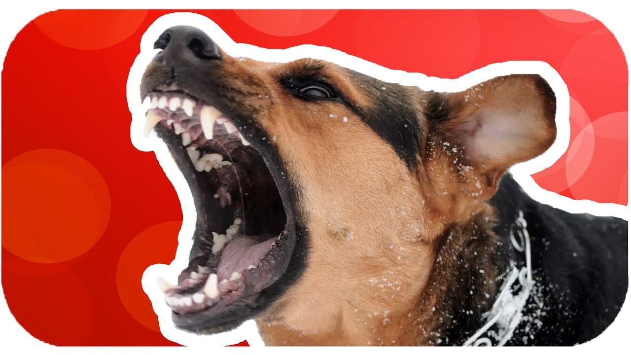 Köpek Isırınca Yapılması Gerekenler