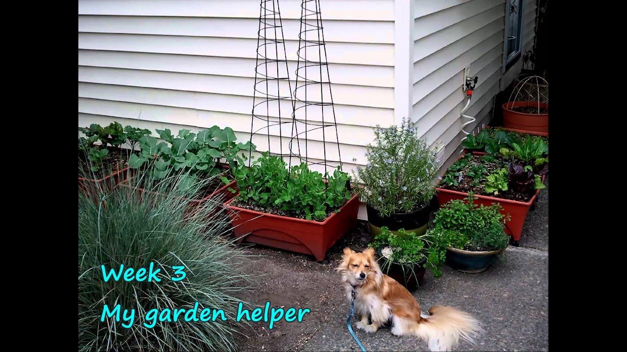 my city pickers sidewalk garden youtube