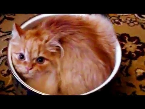 Funny Cats  😻 Cute Cats Playing [Funny Pets]