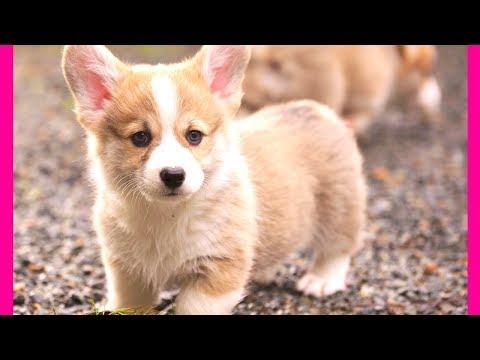 10 Least Aggressive Dog Breeds