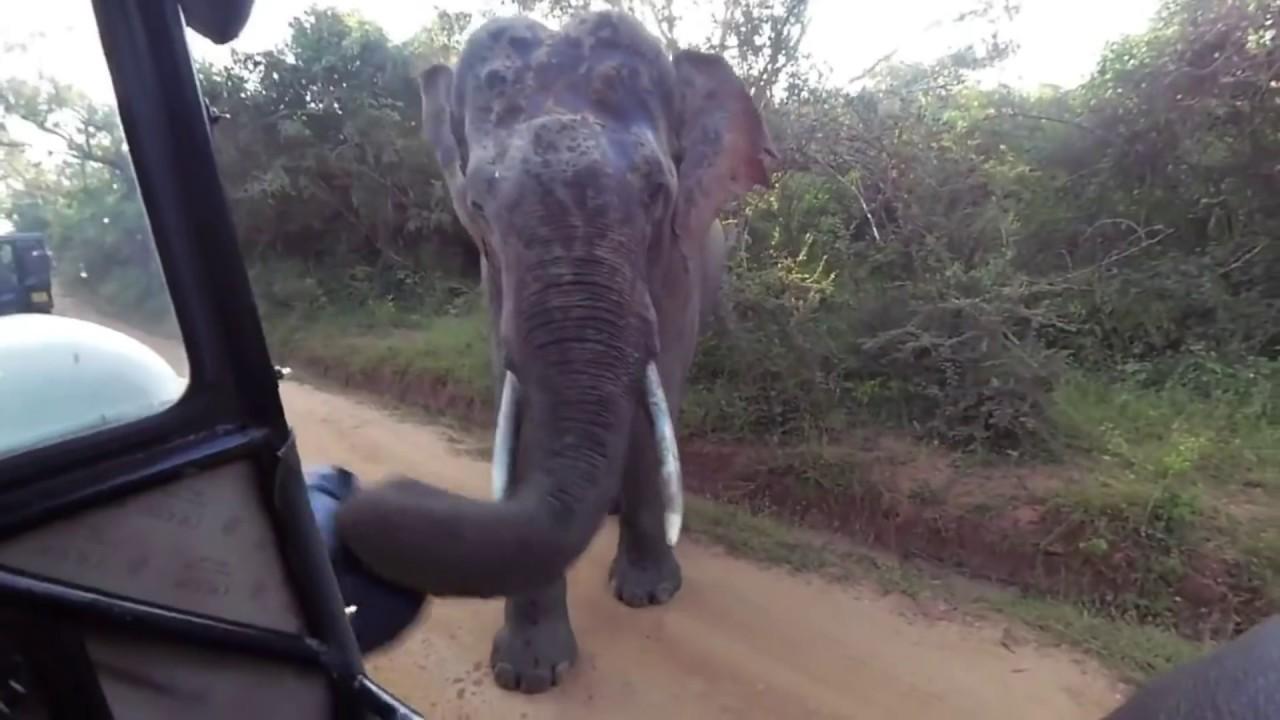Не Шути со Слоном! Подборка Нападений Слона на Человека! Жесть!