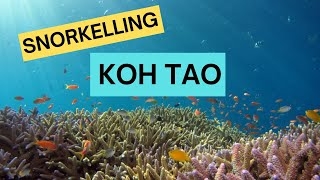 Video Freediving/snorkeling  Koh Tao, Thailand (Twins and White Rock) download MP3, 3GP, MP4, WEBM, AVI, FLV Agustus 2018