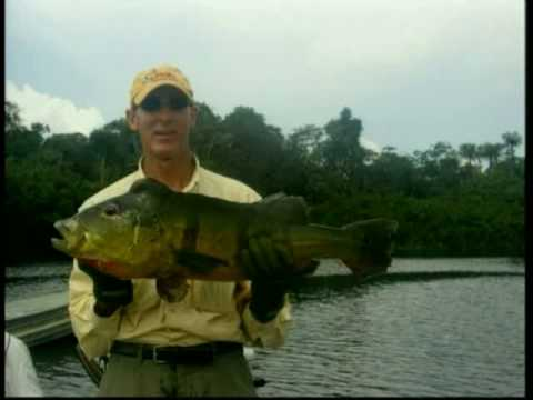 Peacock Bass Fishing In Amazon By River Plate Anglers