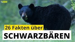26 Steckbrief-Fakten über Schwarzbären - Doku-Wissen für Kinder
