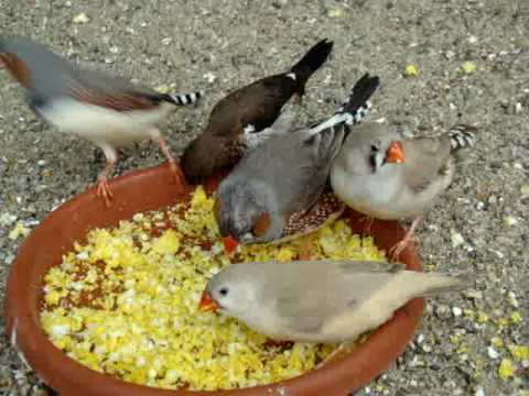 how to make finches happy