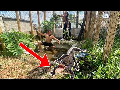 catching-all-my-gators-deep-cleaning-the-enclosure!-*crazy*