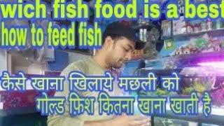 best fish food for aquarium fish how much fish will eat