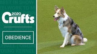 Obedience Championship Display | Crufts 2020