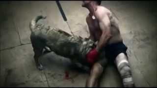 köpek ve insan kavgası